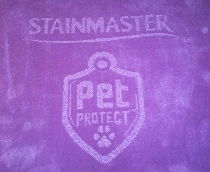 STAINMASTER® PetProtect™ purple carpet at The 138th Westminster Kennel Club Dog Show