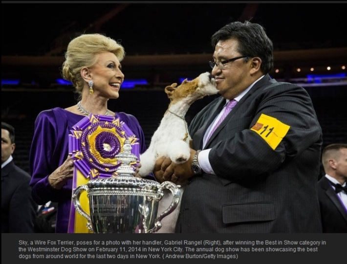 The 138th Westminster Kennel Club Dog Show