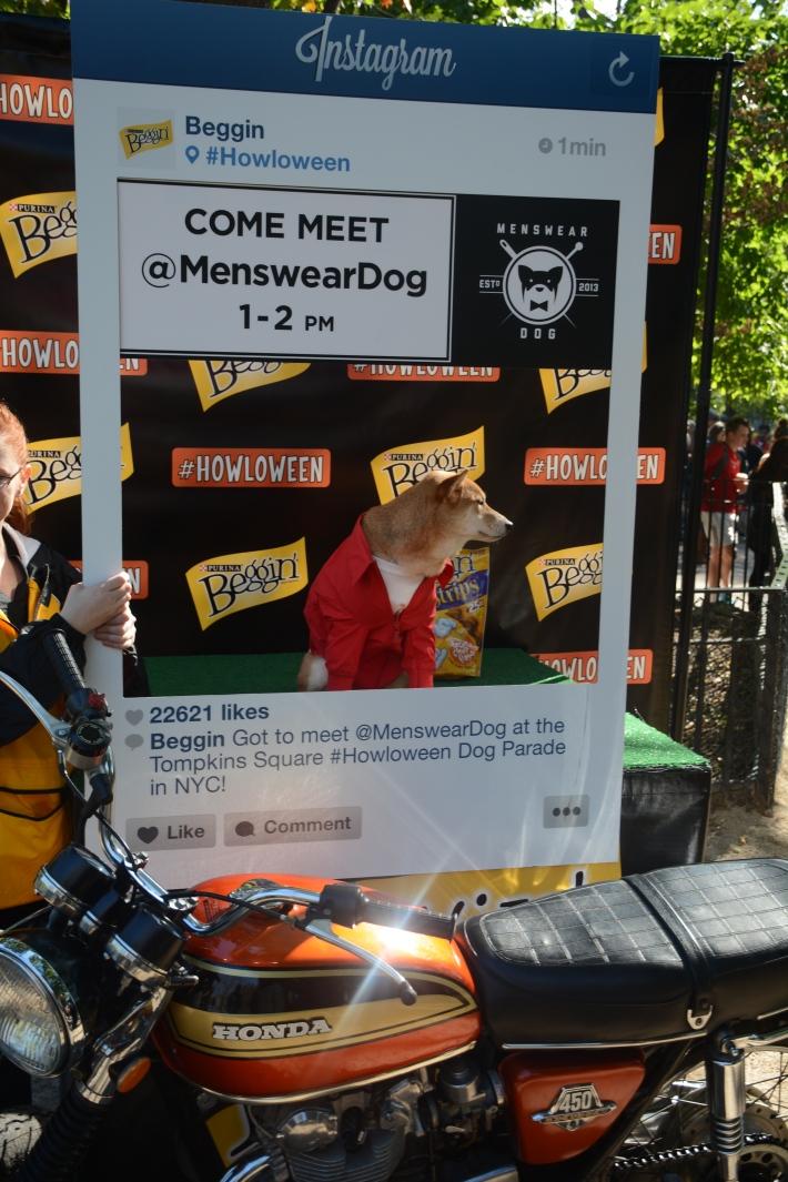 MensWearDog at 2014 Tompkins Square Park Halloween Dog Parade