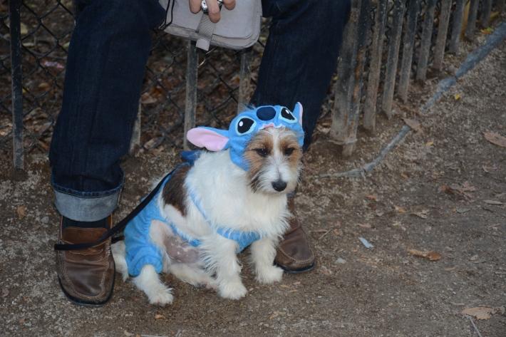 Lilo & Stitch at 2014 Tompkins Square Park Halloween Dog Parade