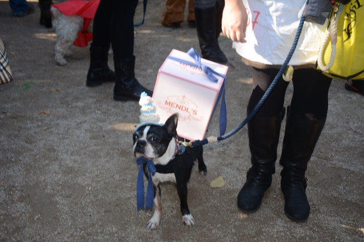 2014 Tompkins Square Park Halloween Dog Parade