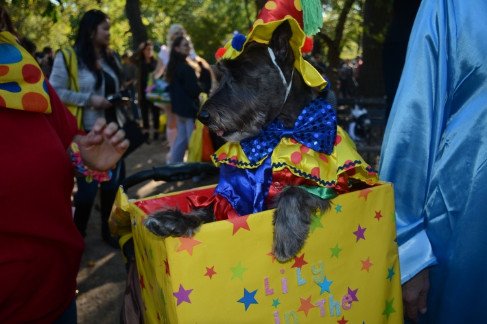 Jack in the Box at 2014 Tompkins Square Park Halloween Dog Parade